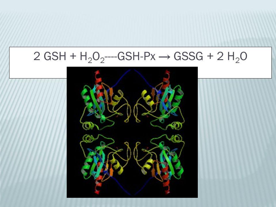 2 GSH + H 2 O 2 ----GSH-Px → GSSG + 2 H 2 O