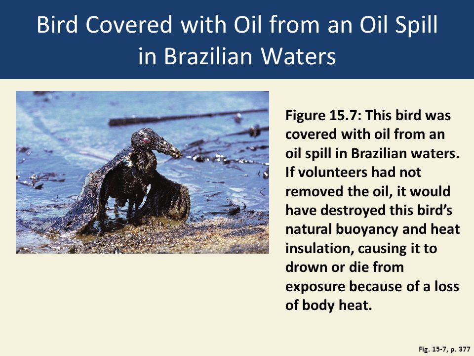 Bird Covered with Oil from an Oil Spill in Brazilian Waters Fig. 15-7, p. 377 Figure 15.7: This bird was covered with oil from an oil spill in Brazili