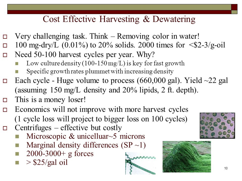 Cost Effective Harvesting & Dewatering  Very challenging task.