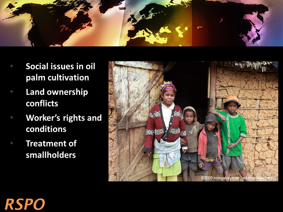 Social issues in oil palm cultivation Land ownership conflicts Worker's rights and conditions Treatment of smallholders