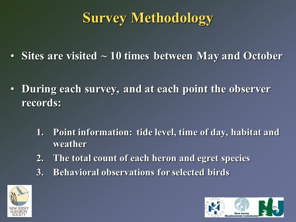 Survey Methodology Sites are visited ~ 10 times between May and OctoberSites are visited ~ 10 times between May and October During each survey, and at each point the observer records:During each survey, and at each point the observer records: 1.Point information: tide level, time of day, habitat and weather 2.The total count of each heron and egret species 3.Behavioral observations for selected birds