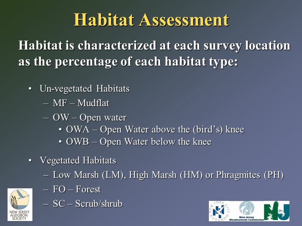 Habitat Assessment Habitat is characterized at each survey location as the percentage of each habitat type: Un-vegetated HabitatsUn-vegetated Habitats –MF – Mudflat –OW – Open water OWA – Open Water above the (bird's) kneeOWA – Open Water above the (bird's) knee OWB – Open Water below the kneeOWB – Open Water below the knee Vegetated HabitatsVegetated Habitats –Low Marsh (LM), High Marsh (HM) or Phragmites (PH) –FO – Forest –SC – Scrub/shrub