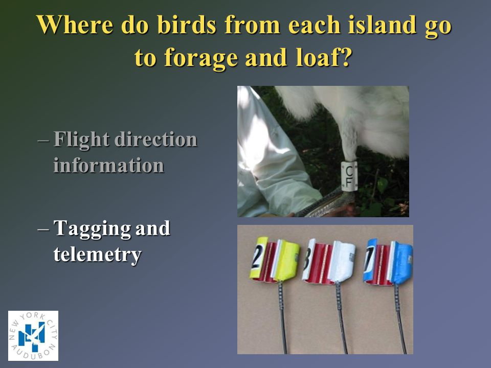 Where do birds from each island go to forage and loaf.