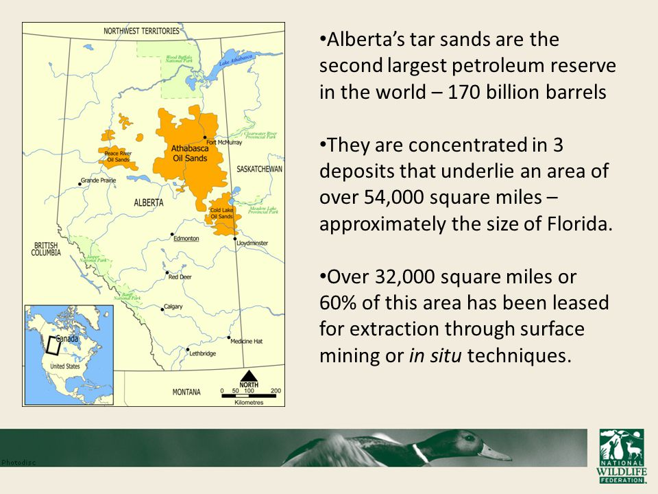 Alberta's tar sands are the second largest petroleum reserve in the world – 170 billion barrels They are concentrated in 3 deposits that underlie an area of over 54,000 square miles – approximately the size of Florida.