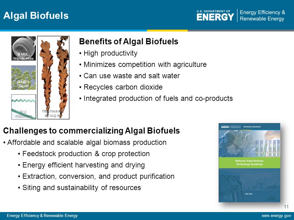 Energy Efficiency & Renewable Energyeere.energy.gov 11 Benefits of Algal Biofuels High productivity Minimizes competition with agriculture Can use was