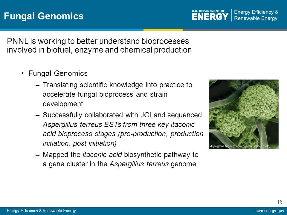 Energy Efficiency & Renewable Energyeere.energy.gov 16 Fungal Genomics PNNL is working to better understand bioprocesses involved in biofuel, enzyme a