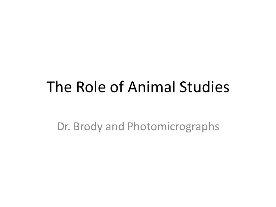The Role of Animal Studies Dr. Brody and Photomicrographs