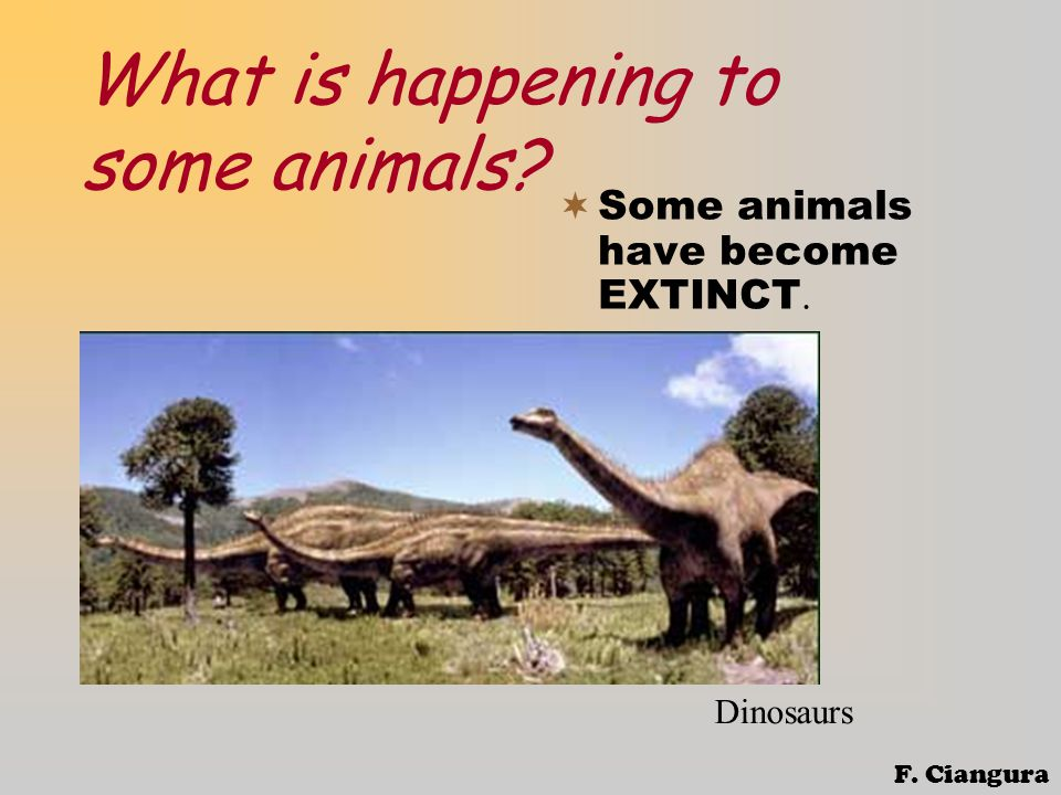 What is happening to some animals  Some animals have become EXTINCT. Dinosaurs F. Ciangura