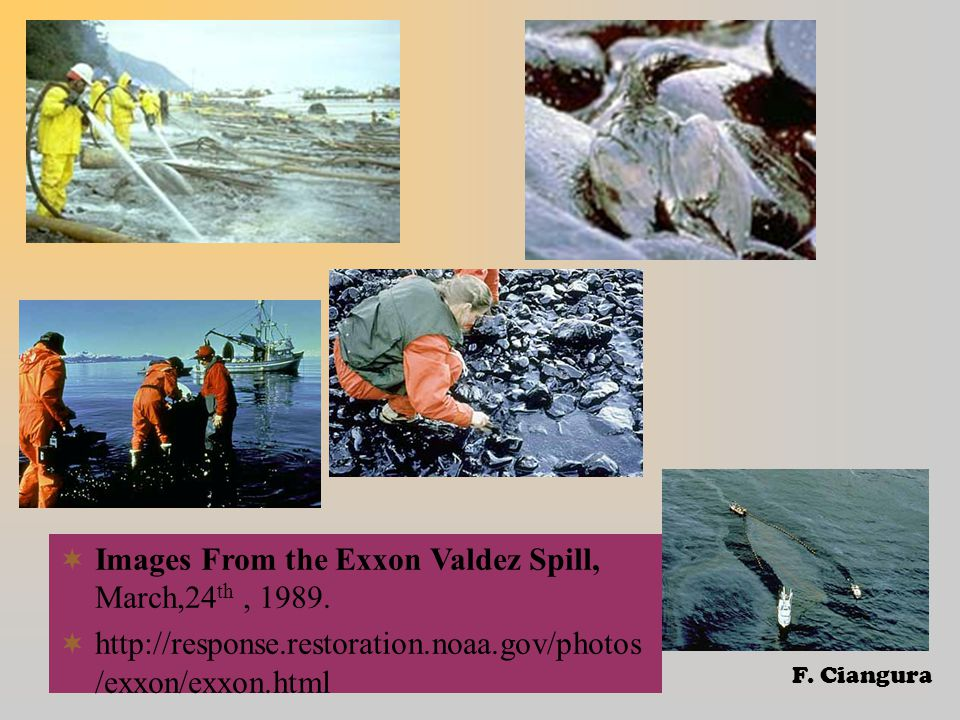  Images From the Exxon Valdez Spill, March,24 th, 1989.