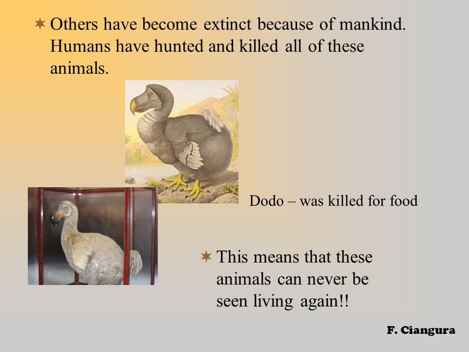  Others have become extinct because of mankind.