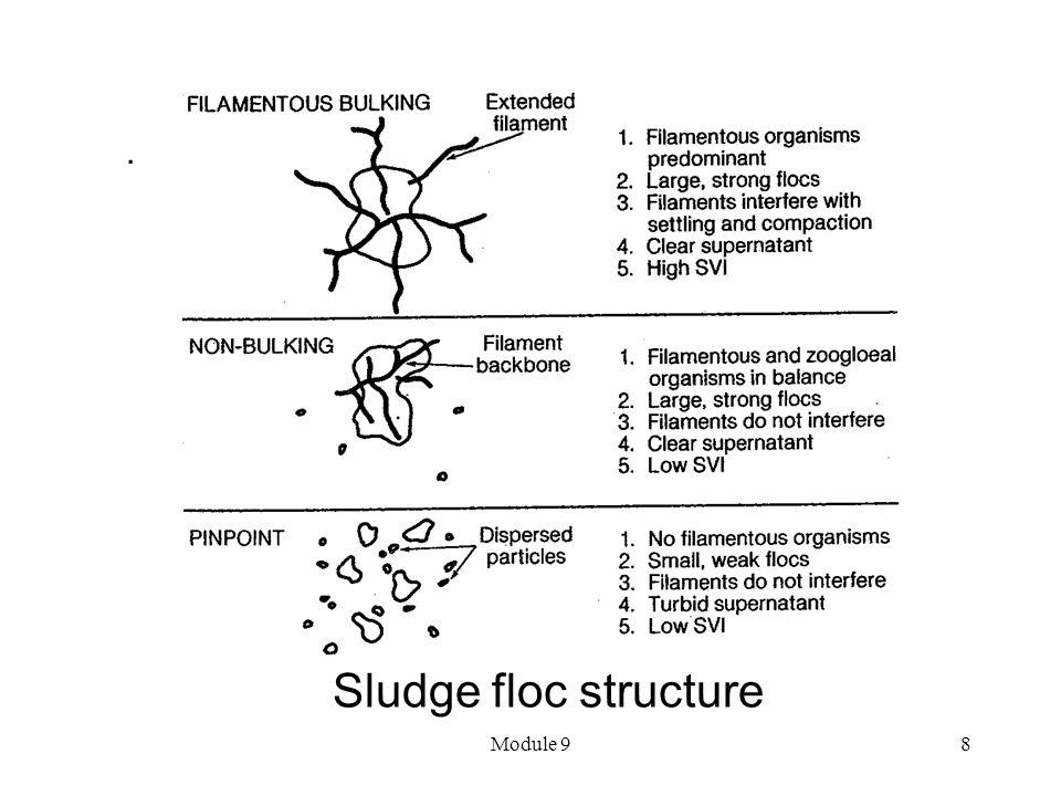 Module 98 Sludge floc structure.