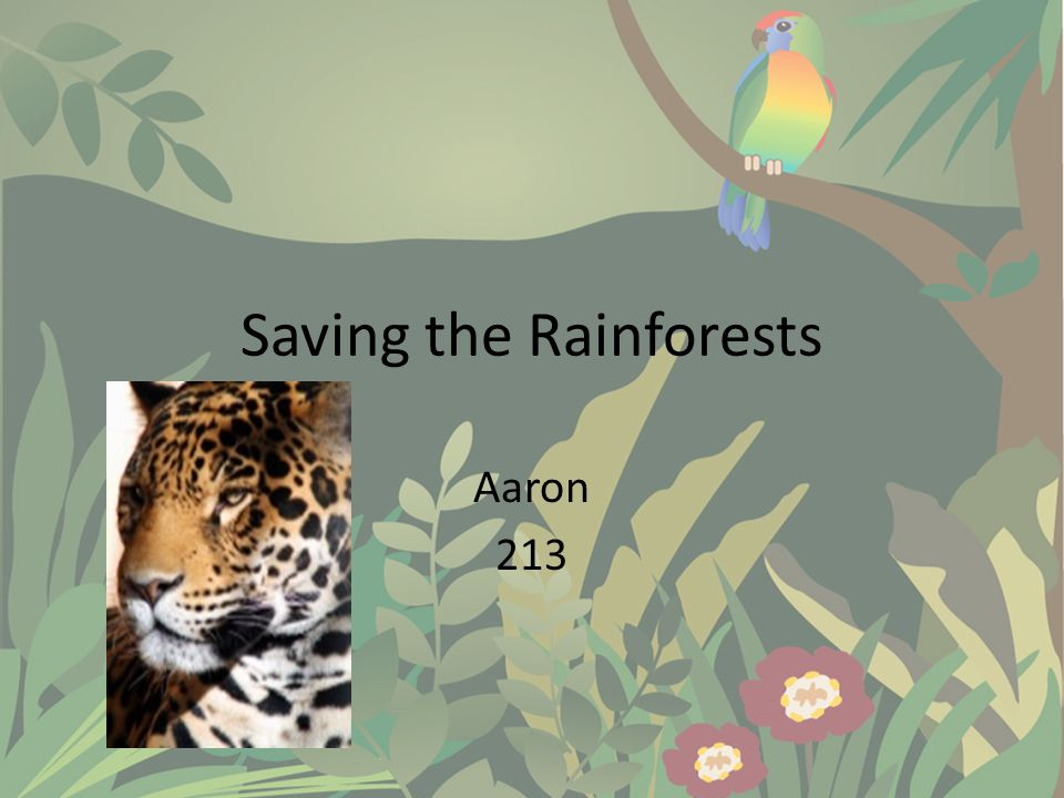 Negative Effects  The rapid decrease in rainforests not only destroys the natural beauty of the land but also leaves many species of animals homeless  The decrease also lowers the amount of oxygen rapidly.