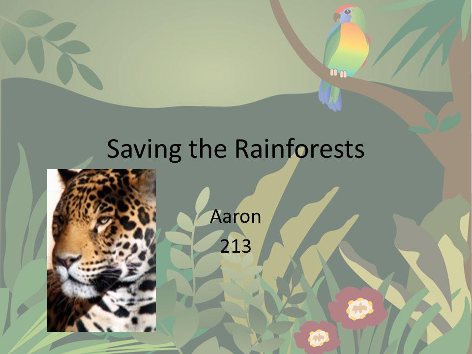 Saving the Rainforests Aaron 213