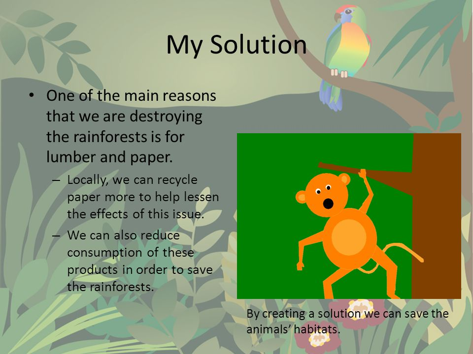 SAVE THE RAINFORESTS!!!