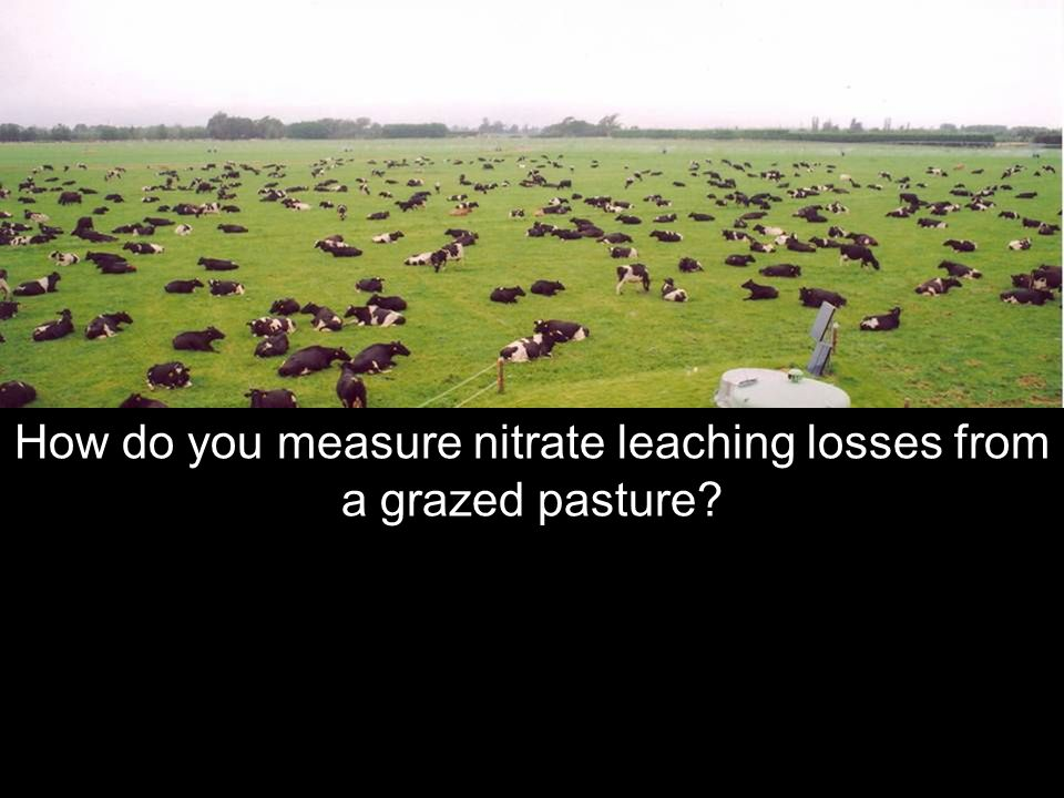 How do you measure nitrate leaching losses from a grazed pasture?