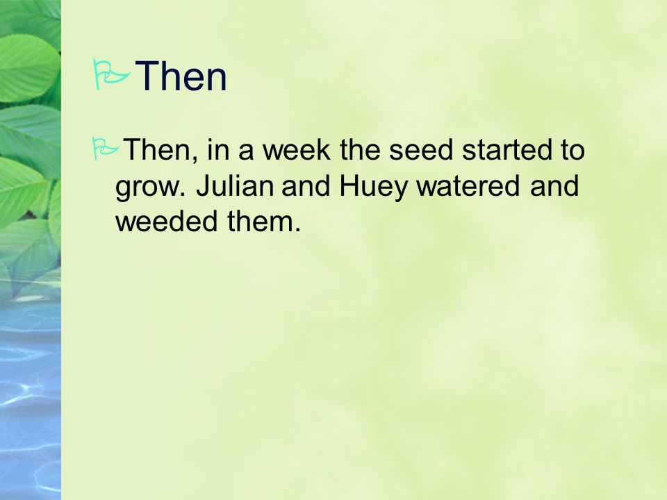 PThen PThen, in a week the seed started to grow. Julian and Huey watered and weeded them.