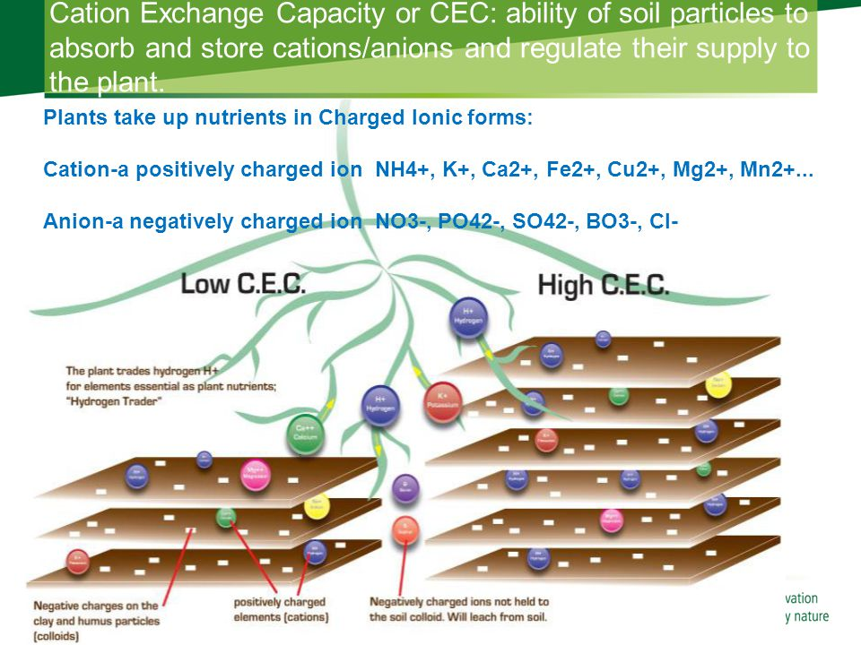 Cation Exchange Capacity or CEC: ability of soil particles to absorb and store cations/anions and regulate their supply to the plant.