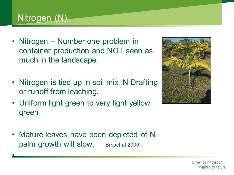 Nitrogen (N) Nitrogen – Number one problem in container production and NOT seen as much in the landscape.