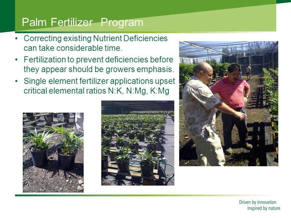 Palm Fertilizer Program Correcting existing Nutrient Deficiencies can take considerable time.