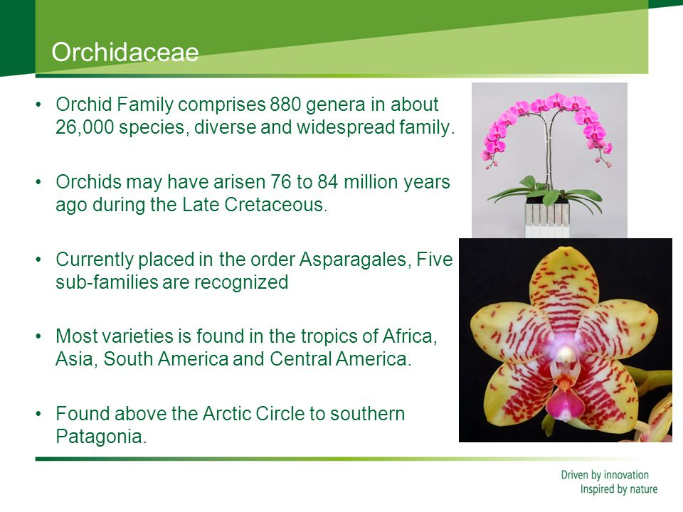 Orchidaceae Orchid Family comprises 880 genera in about 26,000 species, diverse and widespread family.