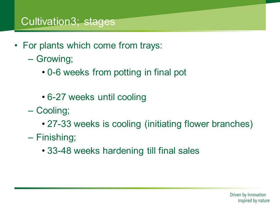 Cultivation3; stages For plants which come from trays: –Growing; 0-6 weeks from potting in final pot 6-27 weeks until cooling –Cooling; 27-33 weeks is cooling (initiating flower branches) –Finishing; 33-48 weeks hardening till final sales