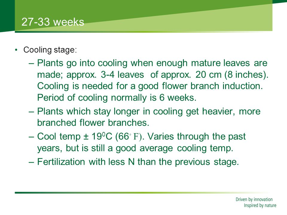 27-33 weeks Cooling stage: –Plants go into cooling when enough mature leaves are made; approx.