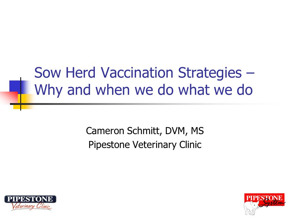 Sow Herd Vaccination Strategies – Why and when we do what we do Cameron Schmitt, DVM, MS Pipestone Veterinary Clinic
