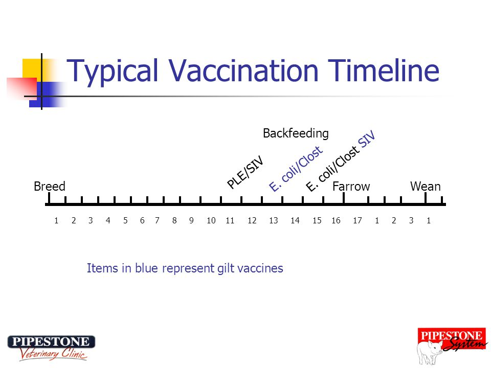 Typical Vaccination Timeline BreedWeanFarrow 1 2 3 4 5 6 7 8 9 10 11 12 13 14 15 16 17 1 2 3 1 PLE/SIV SIV E.