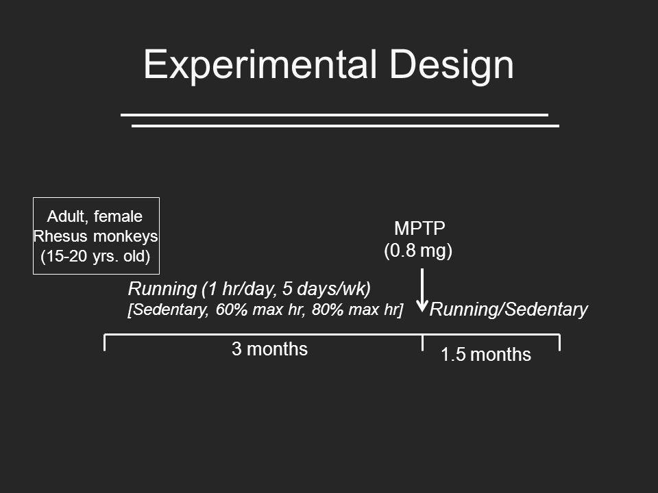 Experimental Design Running (1 hr/day, 5 days/wk) [Sedentary, 60% max hr, 80% max hr] 3 months MPTP (0.8 mg) Running/Sedentary 1.5 months Adult, female Rhesus monkeys (15-20 yrs.