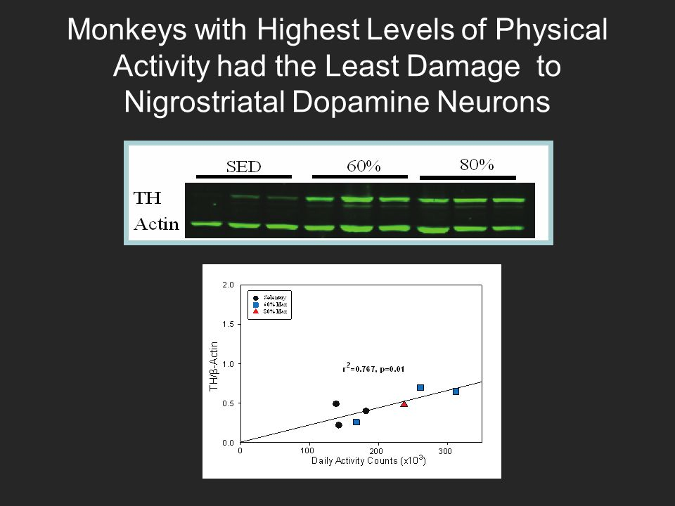 Monkeys with Highest Levels of Physical Activity had the Least Damage to Nigrostriatal Dopamine Neurons * * Middle-aged Mature * * * *