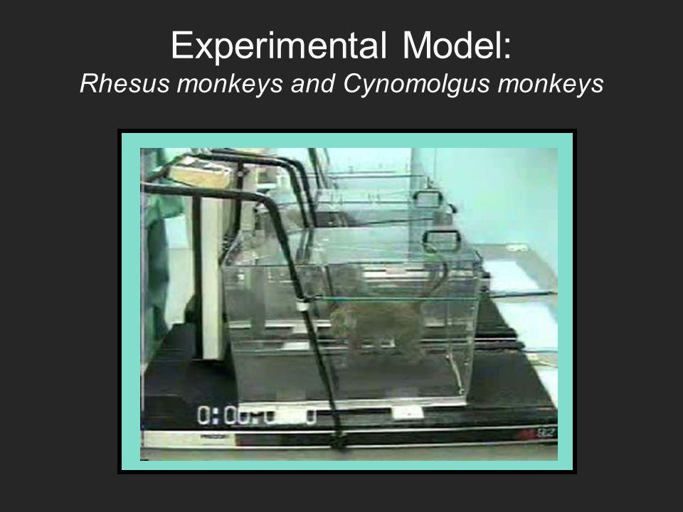 Experimental Model: Rhesus monkeys and Cynomolgus monkeys