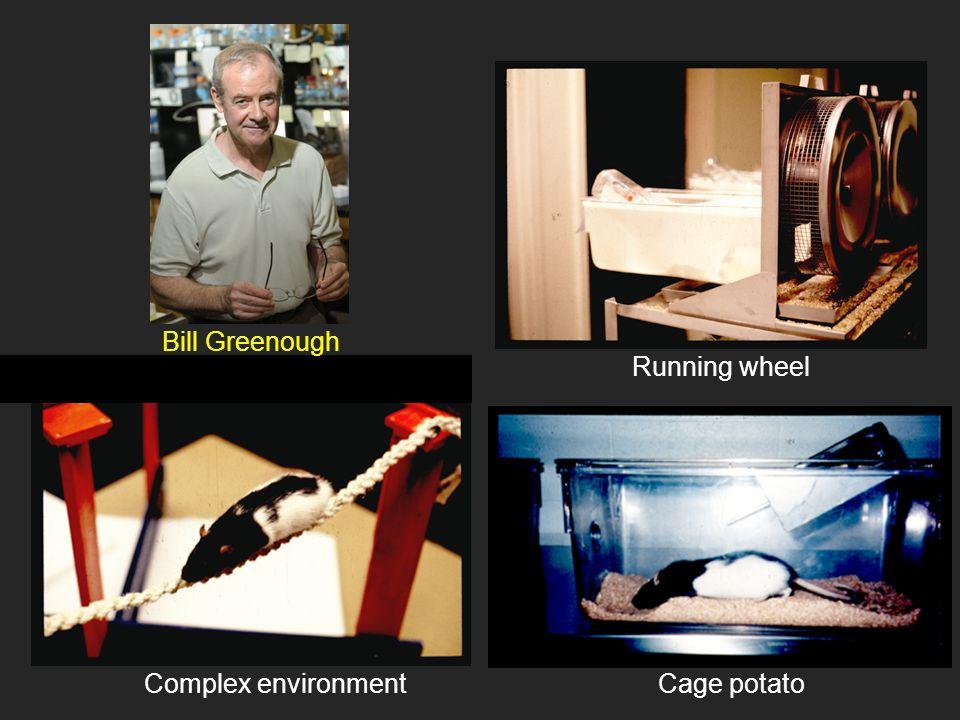 Bill Greenough Running wheel Complex environment Cage potato