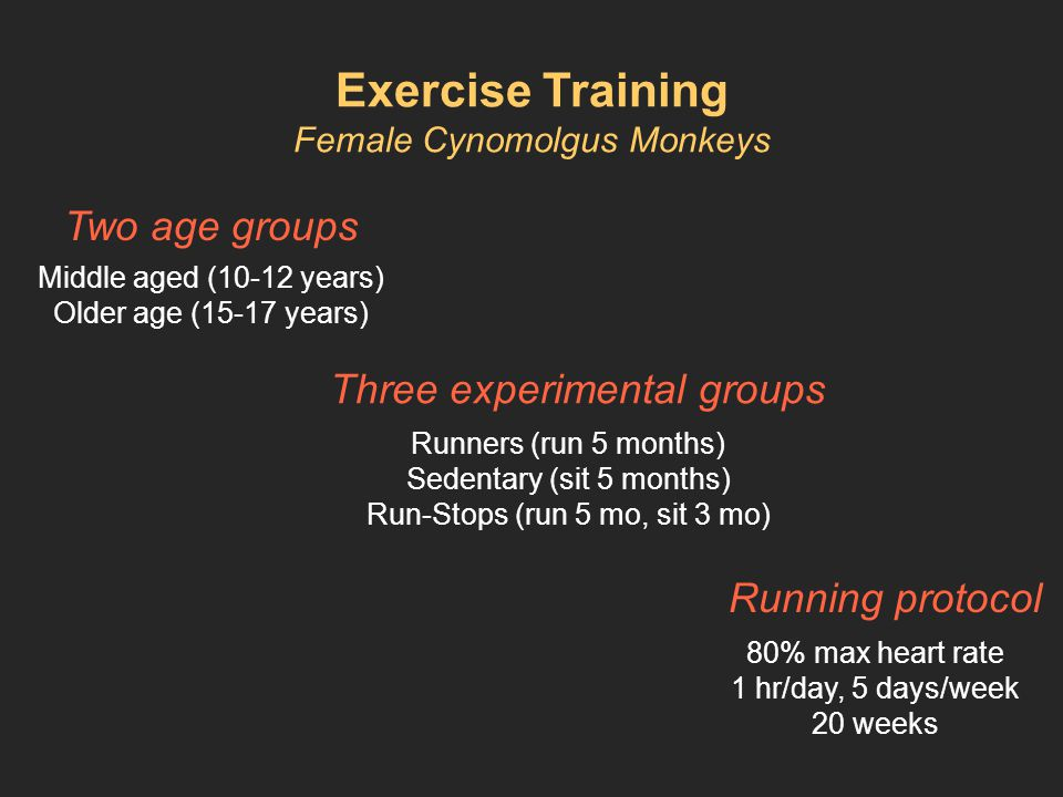 Exercise Training Female Cynomolgus Monkeys Two age groups Middle aged (10-12 years) Older age (15-17 years) Three experimental groups Runners (run 5 months) Sedentary (sit 5 months) Run-Stops (run 5 mo, sit 3 mo) Running protocol 80% max heart rate 1 hr/day, 5 days/week 20 weeks