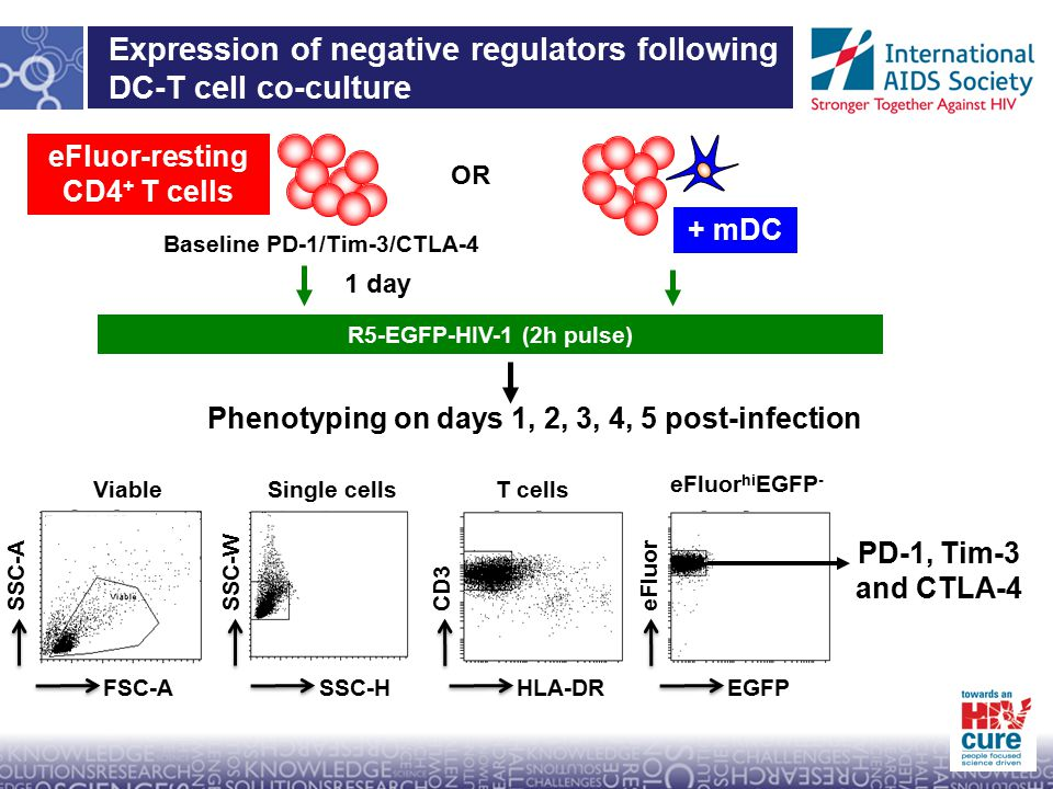 Expression of negative regulators following DC-T cell co-culture eFluor-resting CD4 + T cells + mDC OR R5-EGFP-HIV-1 (2h pulse) 1 day Baseline PD-1/Tim-3/CTLA-4 Phenotyping on days 1, 2, 3, 4, 5 post-infection ViableSingle cellsT cells eFluor hi EGFP - PD-1, Tim-3 and CTLA-4 EGFP eFluor HLA-DR CD3 SSC-H SSC-W FSC-A SSC-A