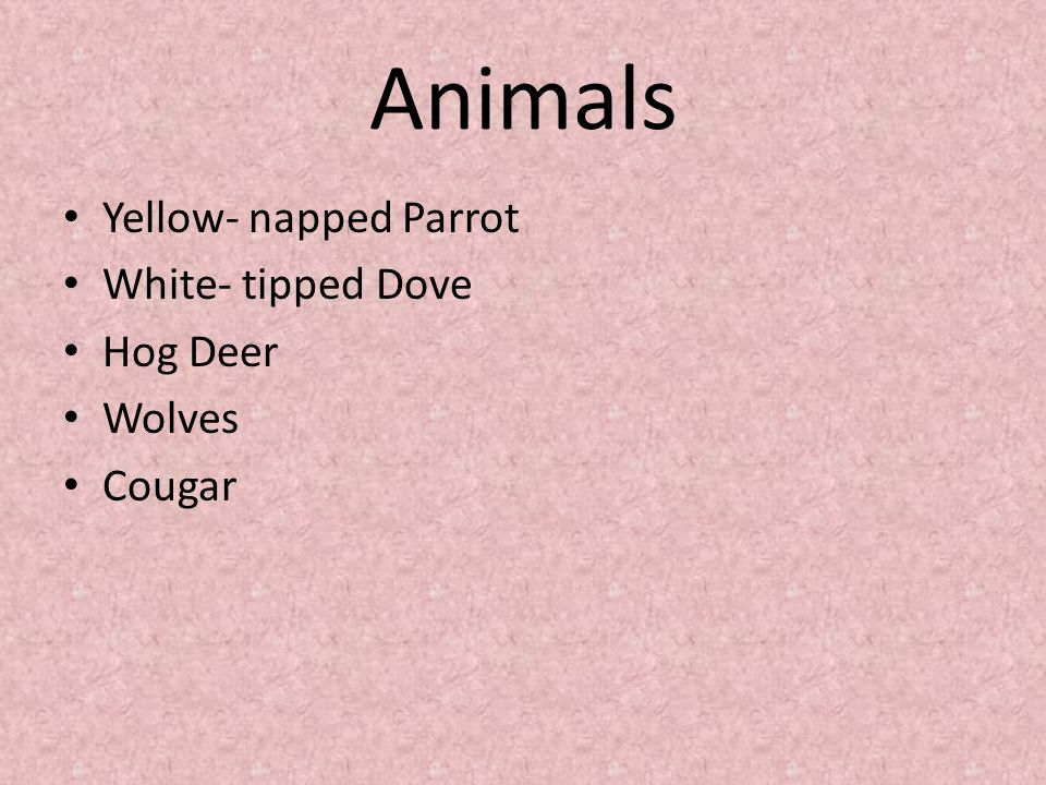 Animals Yellow- napped Parrot White- tipped Dove Hog Deer Wolves Cougar