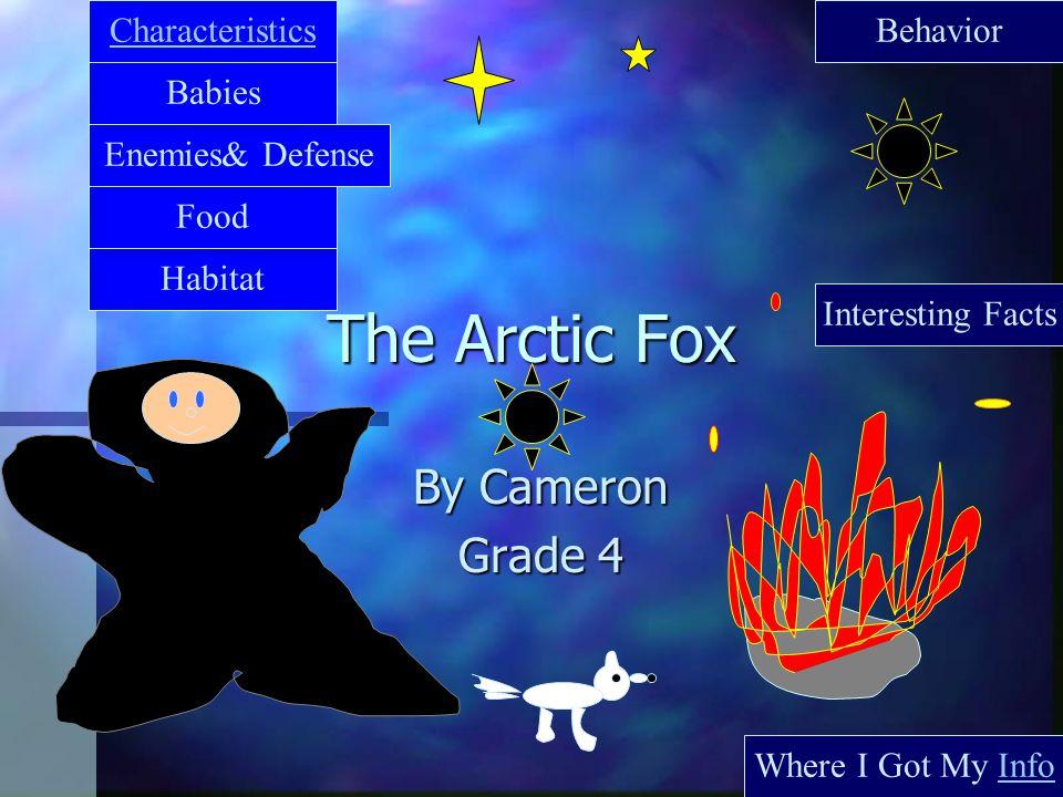 The Arctic Fox By Cameron Grade 4 Characteristics Babies Food Where I Got My Info Interesting Facts Behavior Habitat Enemies& Defense