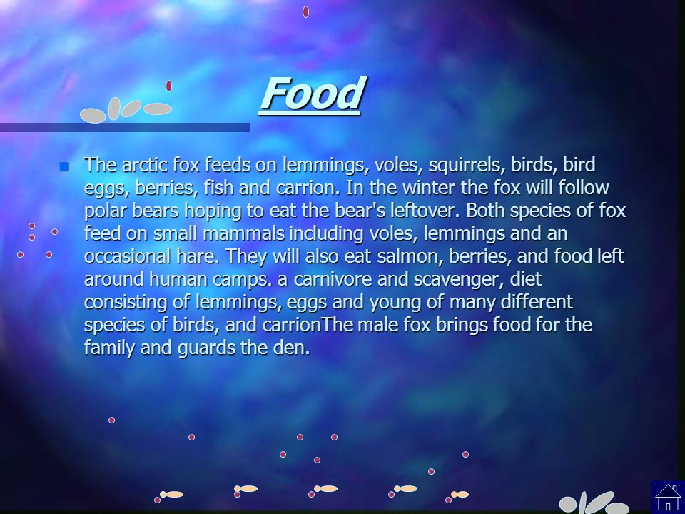 Food n The arctic fox feeds on lemmings, voles, squirrels, birds, bird eggs, berries, fish and carrion. In the winter the fox will follow polar bears