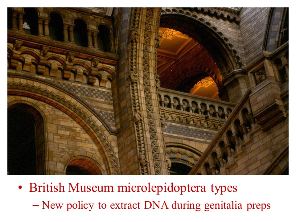 British Museum microlepidoptera types – New policy to extract DNA during genitalia preps