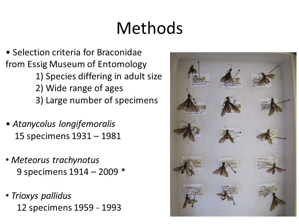 Methods Selection criteria for Braconidae from Essig Museum of Entomology 1) Species differing in adult size 2) Wide range of ages 3) Large number of specimens Atanycolus longifemoralis 15 specimens 1931 – 1981 Meteorus trachynotus 9 specimens 1914 – 2009 * Trioxys pallidus 12 specimens 1959 - 1993