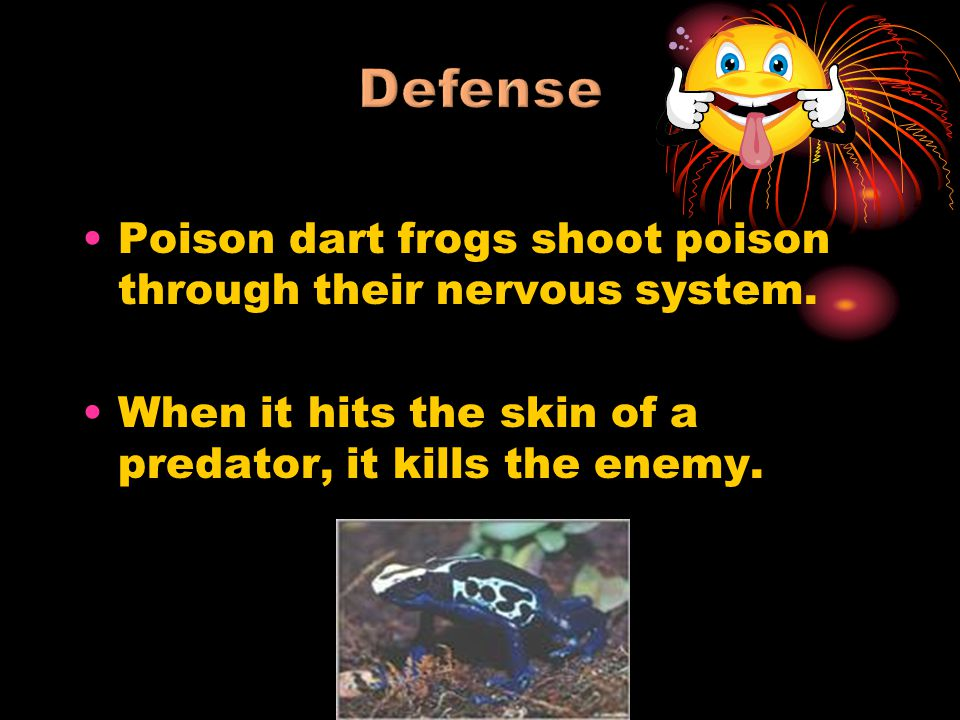 Poison dart frogs shoot poison through their nervous system. When it hits the skin of a predator, it kills the enemy.