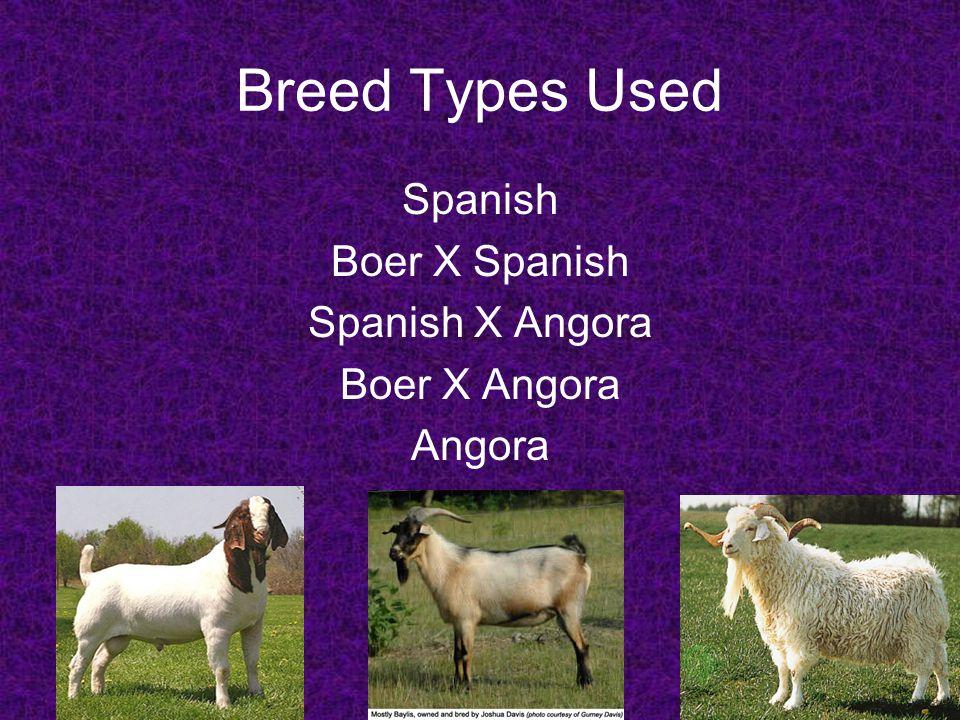 Breed Types Used Spanish Boer X Spanish Spanish X Angora Boer X Angora Angora