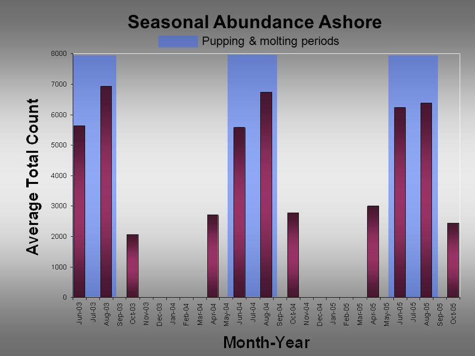 Seasonal Abundance Ashore Pupping & molting periods