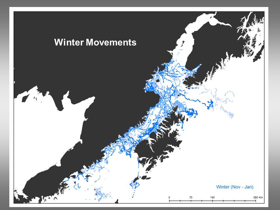 Winter Movements