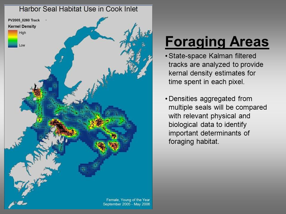 Foraging Areas State-space Kalman filtered tracks are analyzed to provide kernal density estimates for time spent in each pixel.