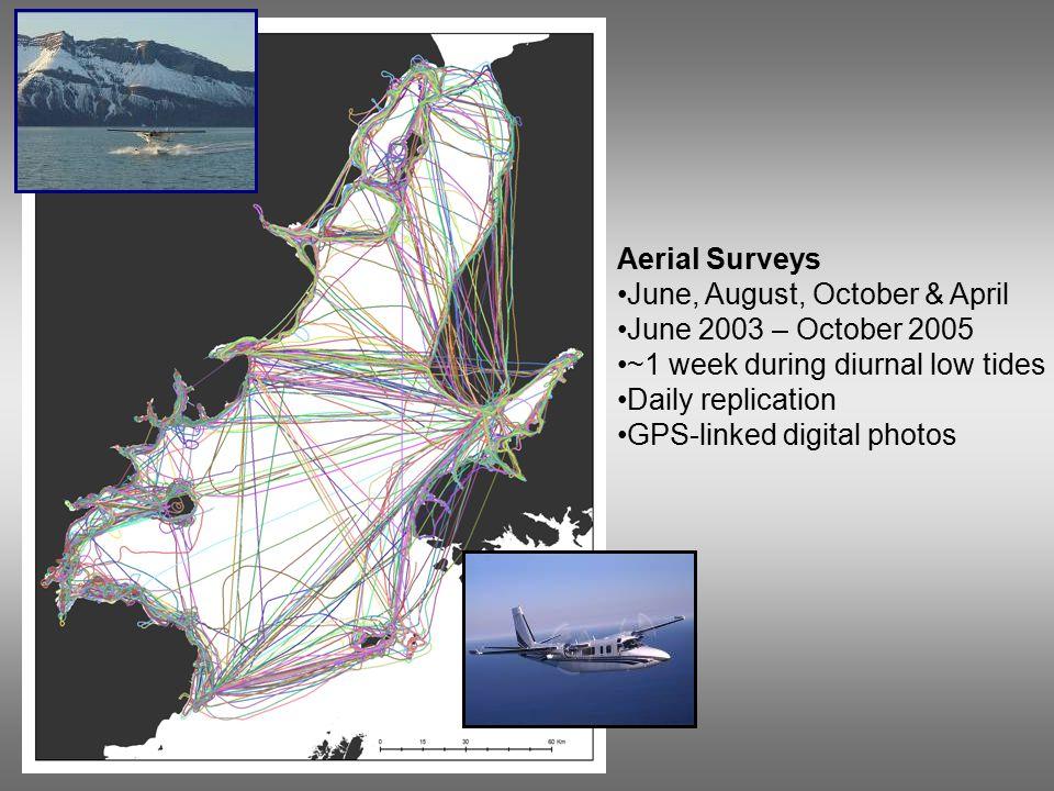 Aerial Surveys June, August, October & April June 2003 – October 2005 ~1 week during diurnal low tides Daily replication GPS-linked digital photos
