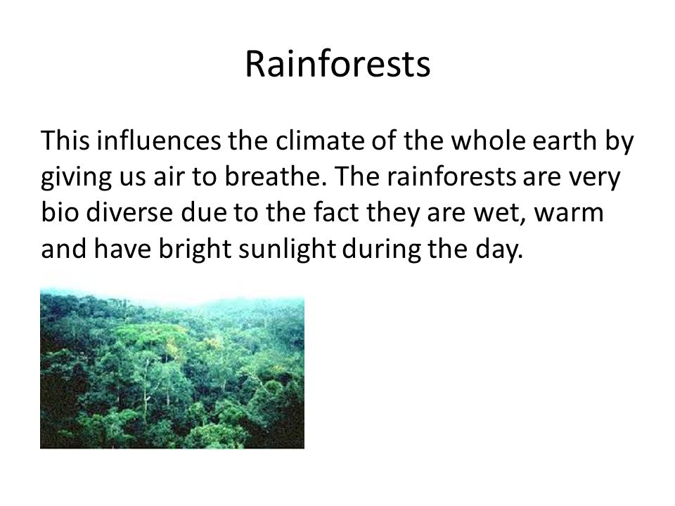 Rainforests This influences the climate of the whole earth by giving us air to breathe.
