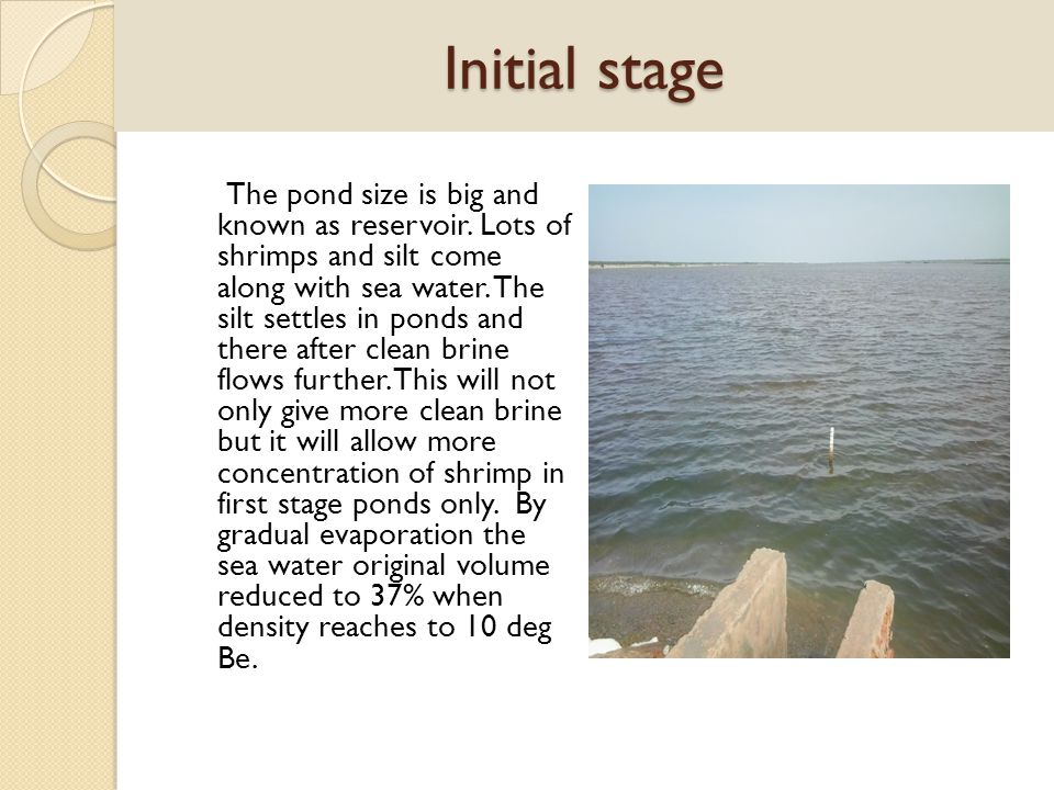 Initial stage The pond size is big and known as reservoir. Lots of shrimps and silt come along with sea water. The silt settles in ponds and there aft