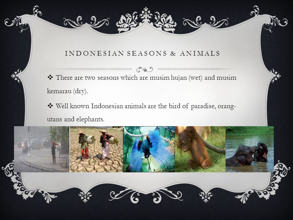 INDONESIAN SEASONS & ANIMALS  There are two seasons which are musim hujan (wet) and musim kemarau (dry).