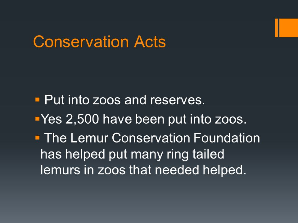 Conservation Acts  Put into zoos and reserves.  Yes 2,500 have been put into zoos.  The Lemur Conservation Foundation has helped put many ring tail