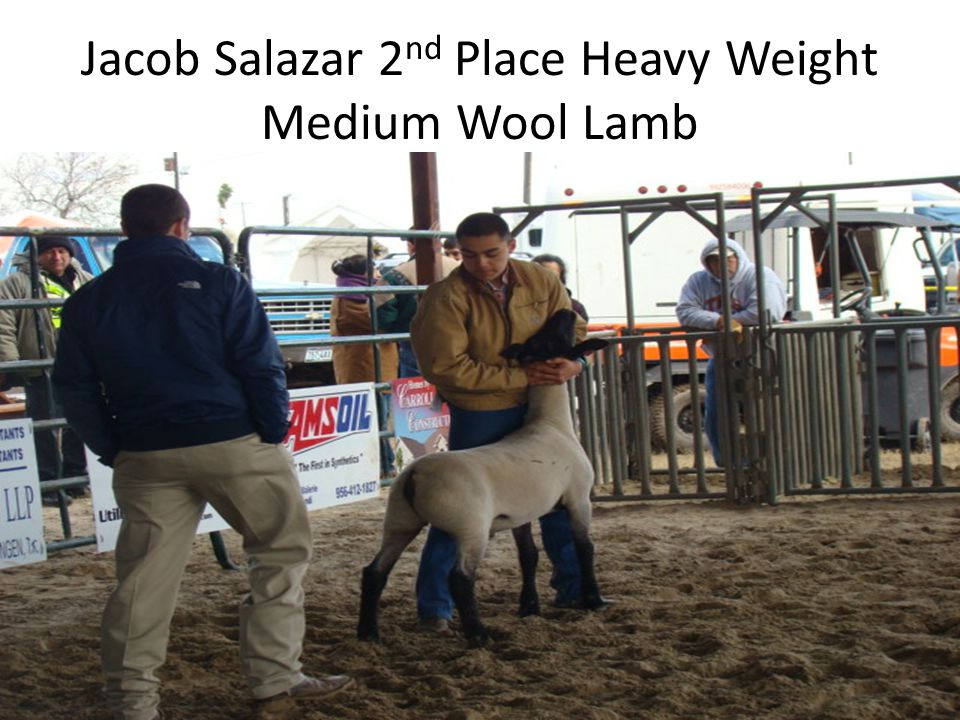 Jacob Salazar 2 nd Place Heavy Weight Medium Wool Lamb